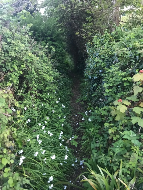 Path to Tolcarne, Newlyn